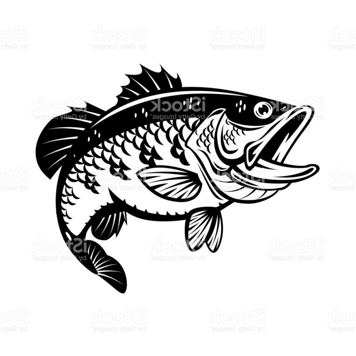Fish Vector Graphic: Graphic Bass Fish Vector Gm