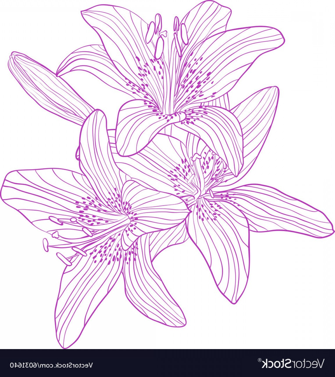 Lily Vector Art: Graphic Drawing Bouquet Of Lilies Vector