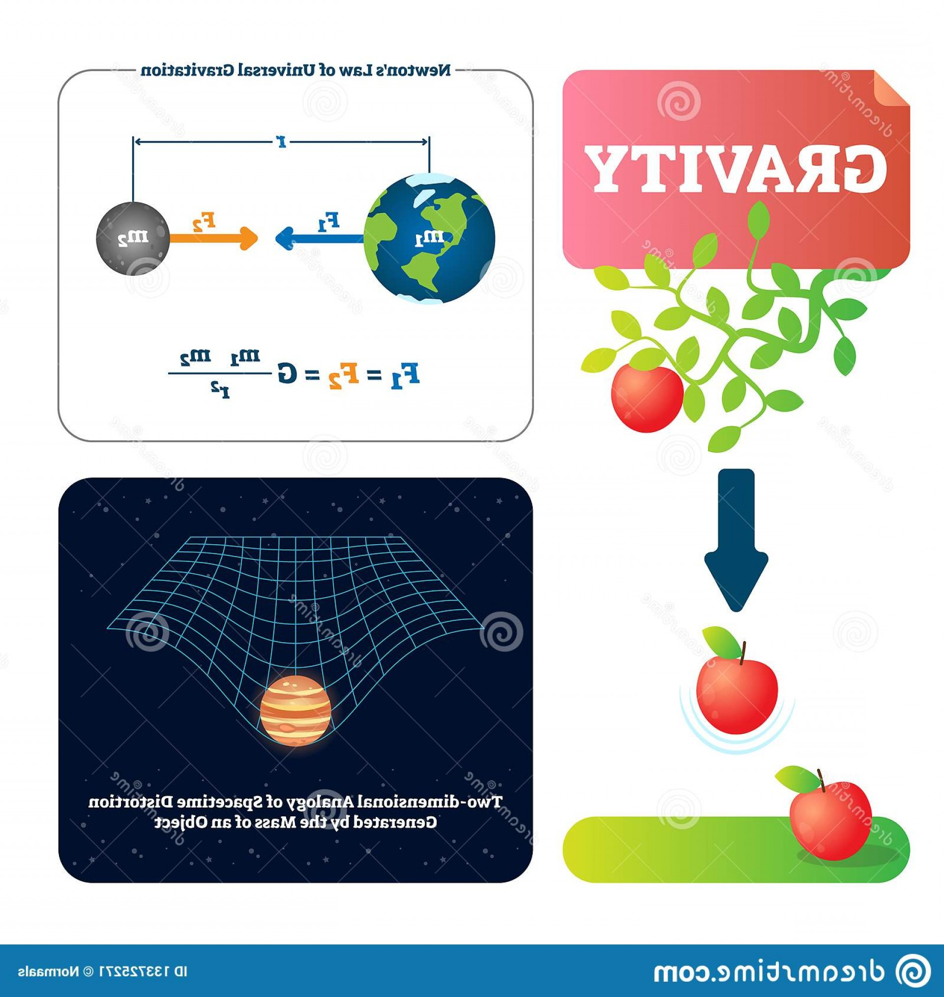 Gravitational Force Vectors: Gravity Vector Illustration Explained Natural Force To Objects Mass Basics Universe Physics Gravitation Gives Weight Image