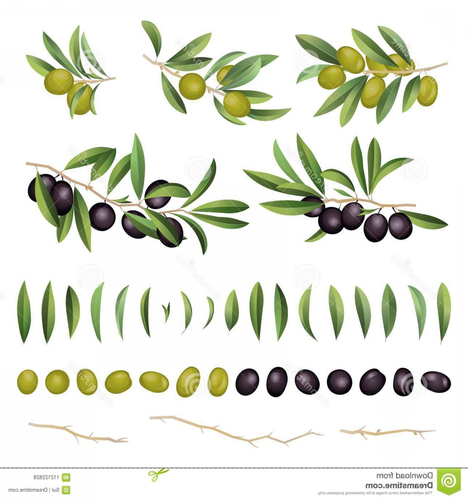 Olive Vector: Green Black Olives Leaves Branch Collection Isolated White Background Known As Olea Europaea European Olive Vector Image