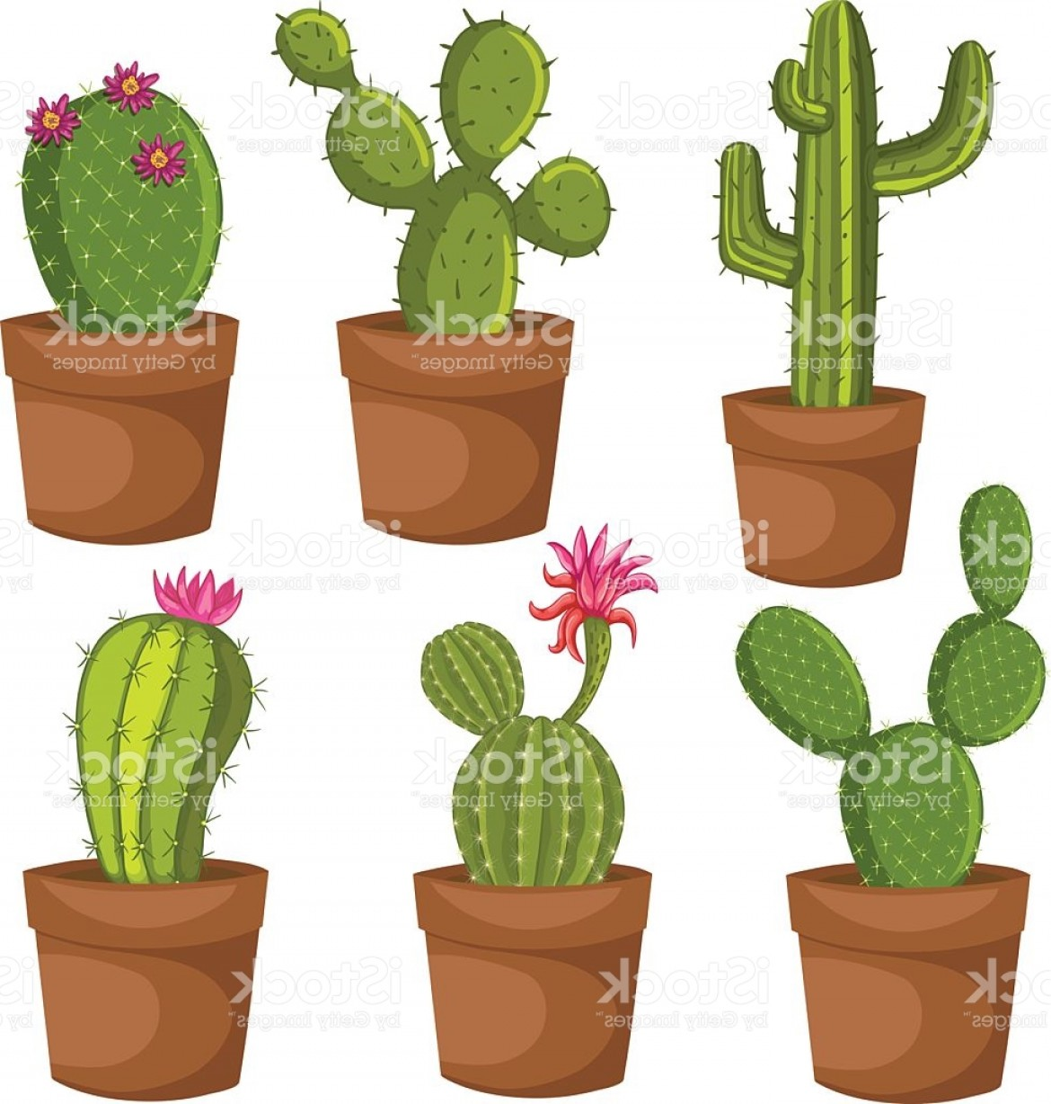Cactus And Flower Vector: Green Desert Plant Nature Cartoon Cactus Gm