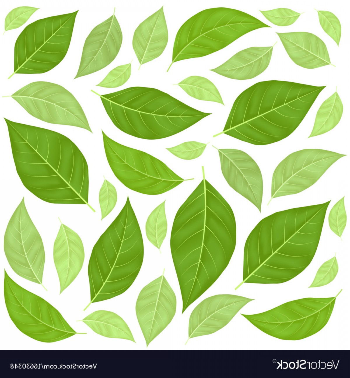 Leaf Background Vector: Green Leaves Pattern Background Vector
