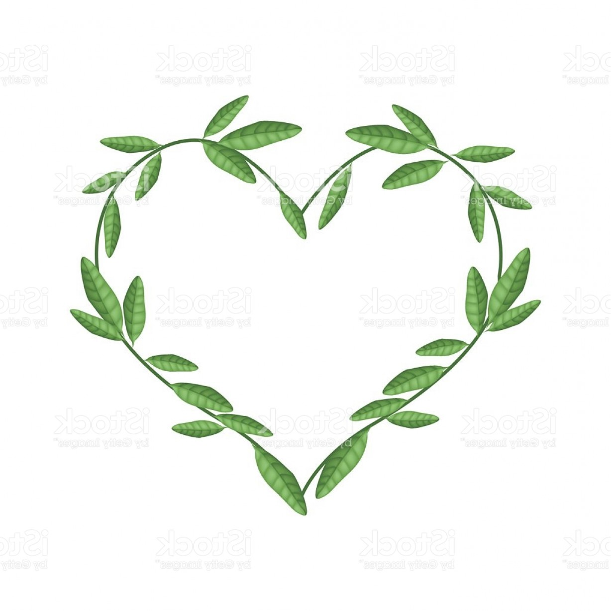 Vector Vine Tree: Green Vine Leaves In Beautiful Heart Shape Gm