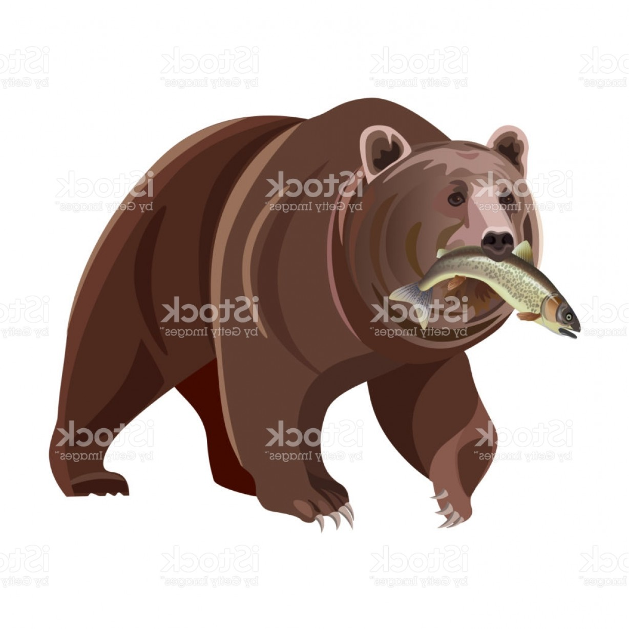 Vector Art Bear With Salmon: Grizzly Bear With Fish Gm