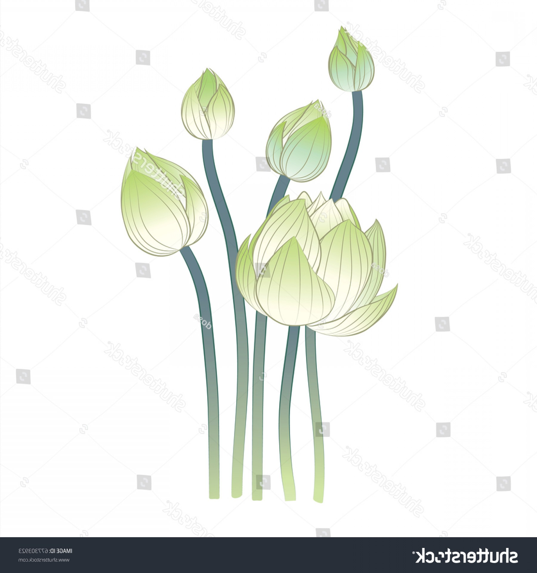 Vector Image Of A Budding Flower: Group Budding Lotus Flowers Vector Illustration