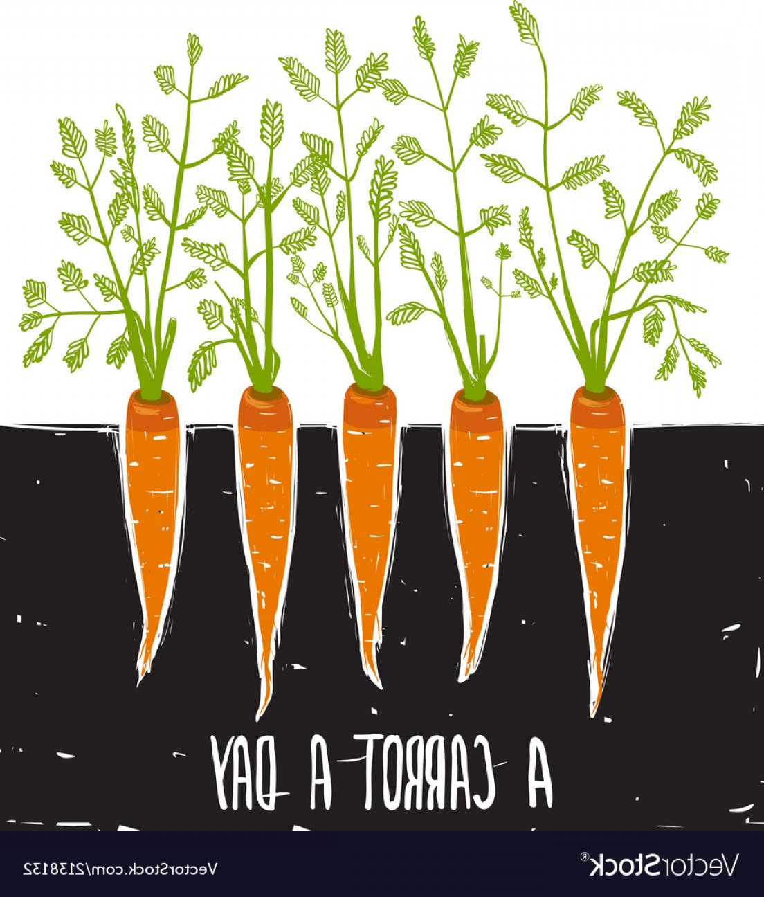 Scratch Y Drawing Vector: Growing Carrots Scratchy Drawing And Lettering Vector