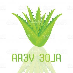 Aloe Vector Graphics: Aloe Vera With Frame Hand Vector