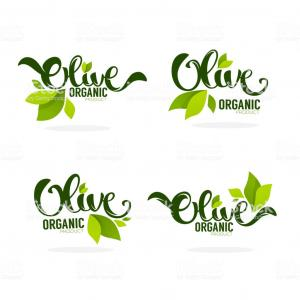 Olive Leaf Vector Logos For: Green Olive Leaves And Lettering Compositions Vector Collection Of Logo Templates Gm