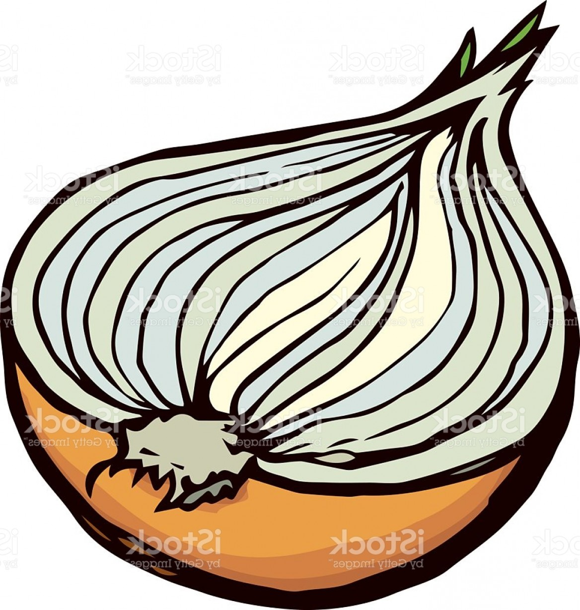 Onion Vector: Half Of Onions Vector Drawing Gm