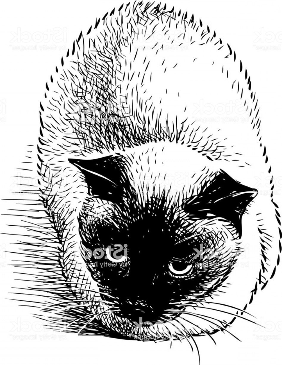 Siamese Cat Vector Transparent Background: Hand Drawing Of A Siamese Cat Gm