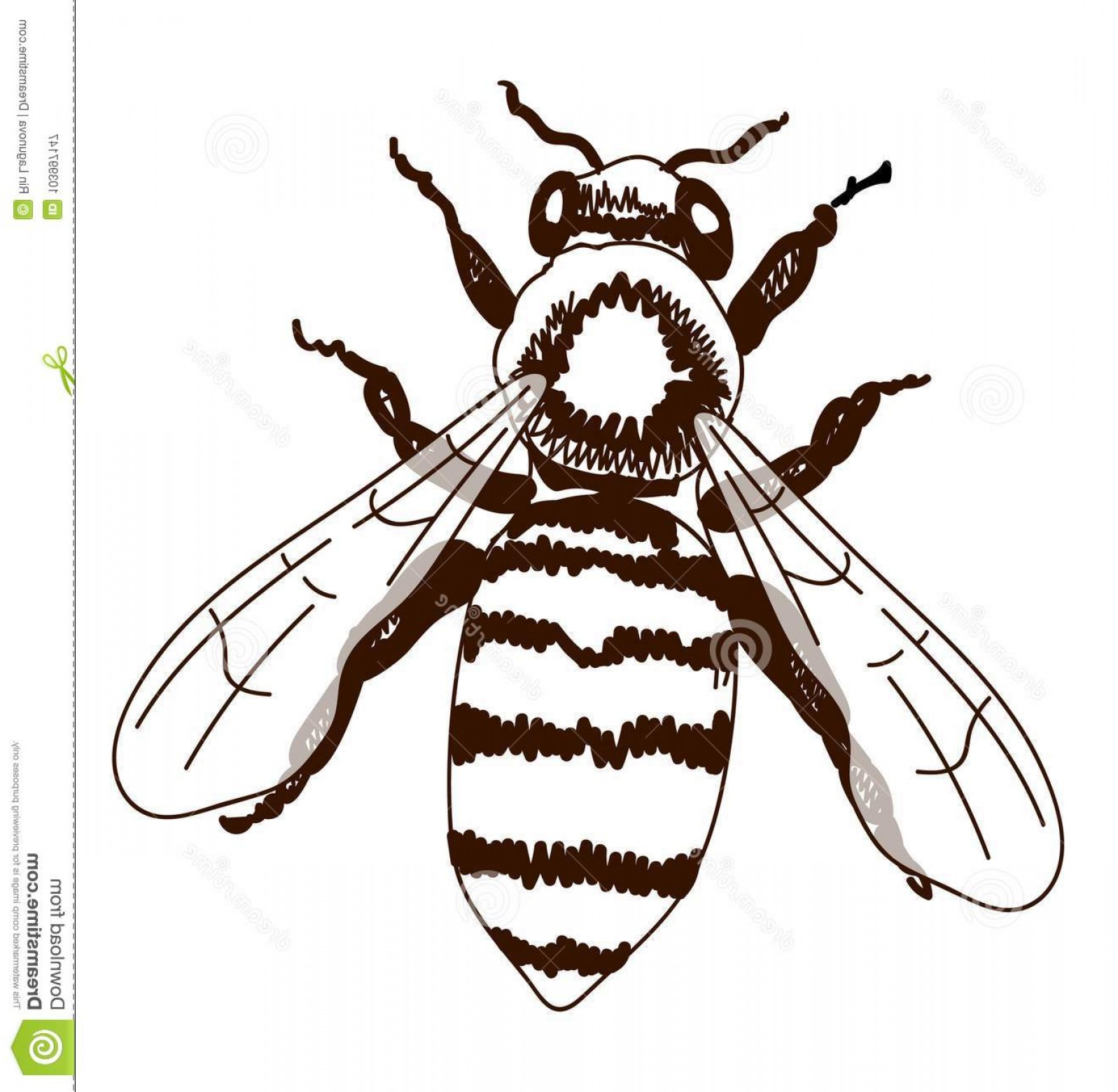 Bee Drawing Vector: Hand Drawn Bee Isolated White Outline Drawing Vector Hand Drawn Bee Isolated White Outline Drawing Vector Vintage Image