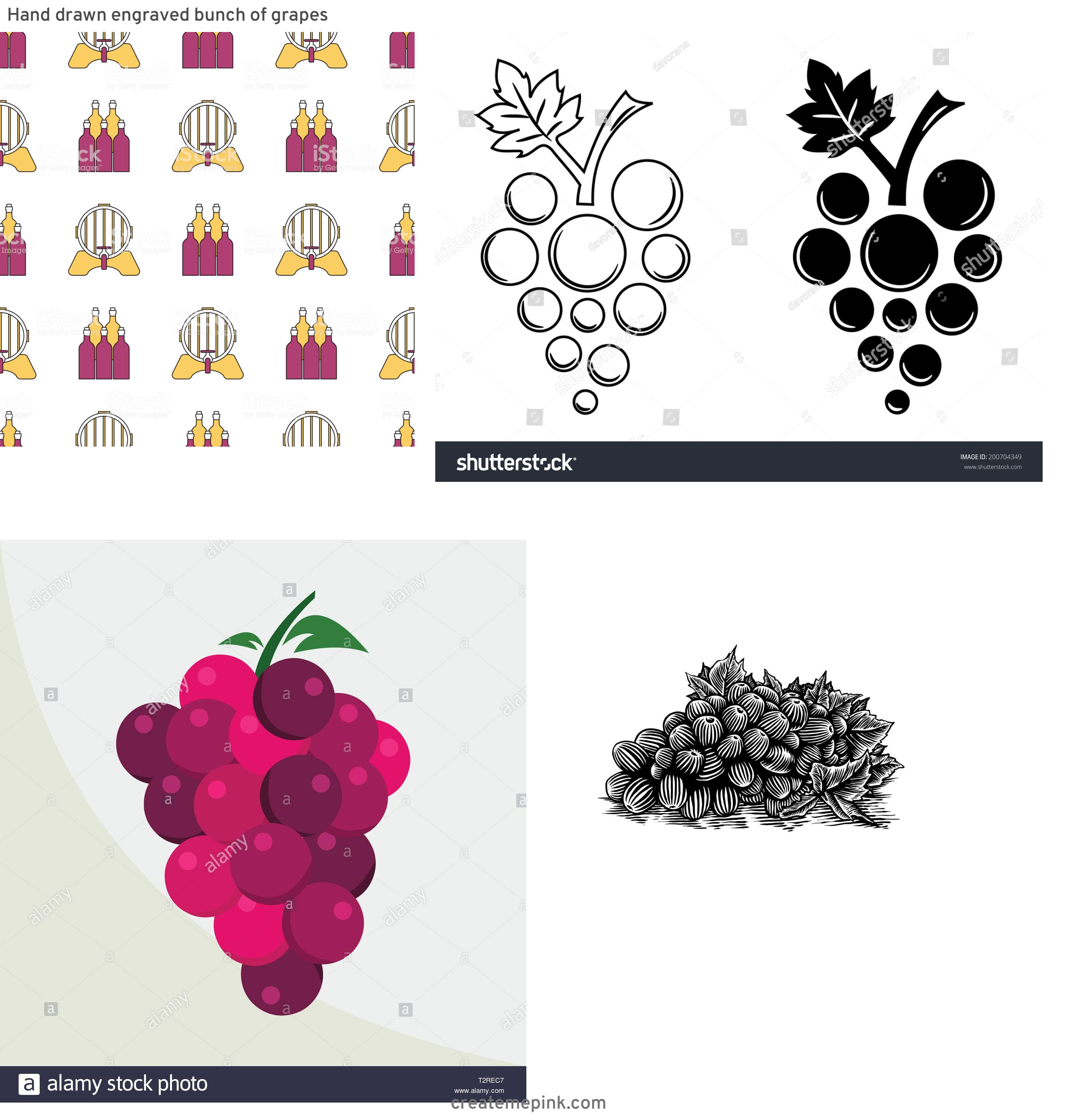 Grapes Vector Art: Hand Drawn Engraved Bunch Of Grapes