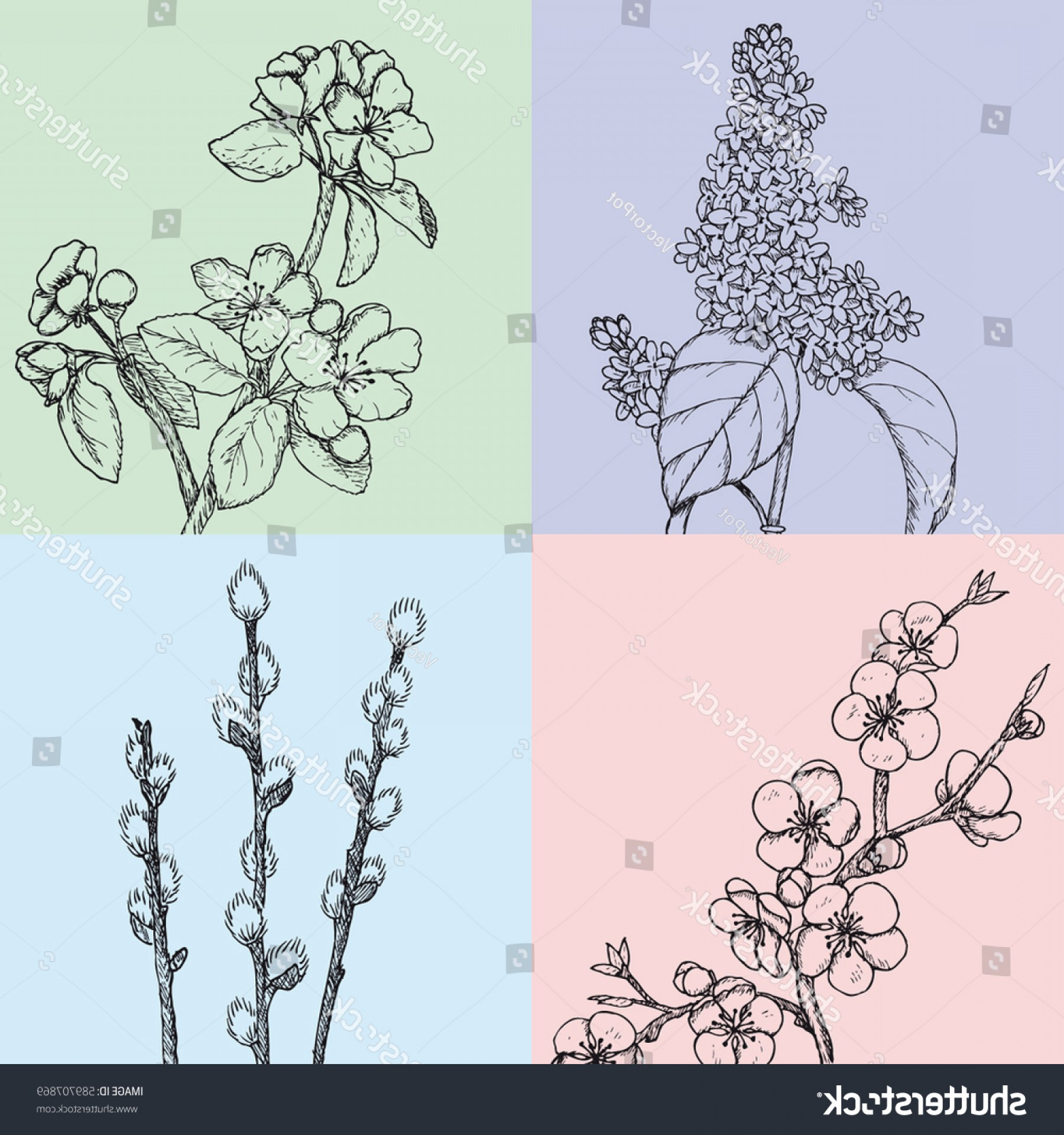 Vector Natural Willow: Hand Drawn Floral Spring Cards Botanical