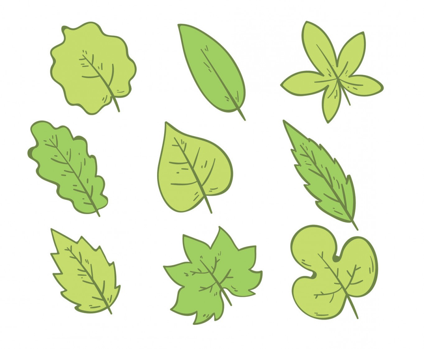 Vector Leaf Graphicd: Hand Drawn Green Leaves On White Vector