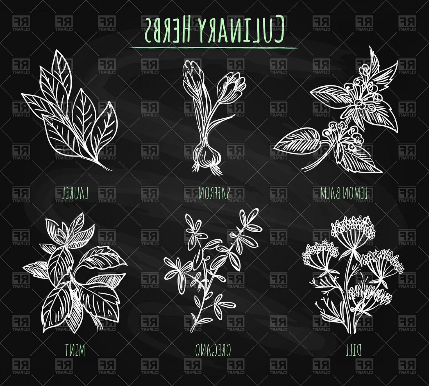 Hand Drawn Laurel Vector: Hand Drawn Laurel And Dill Oregano And Mint Culinary Spicy Herbs Vector Clipart