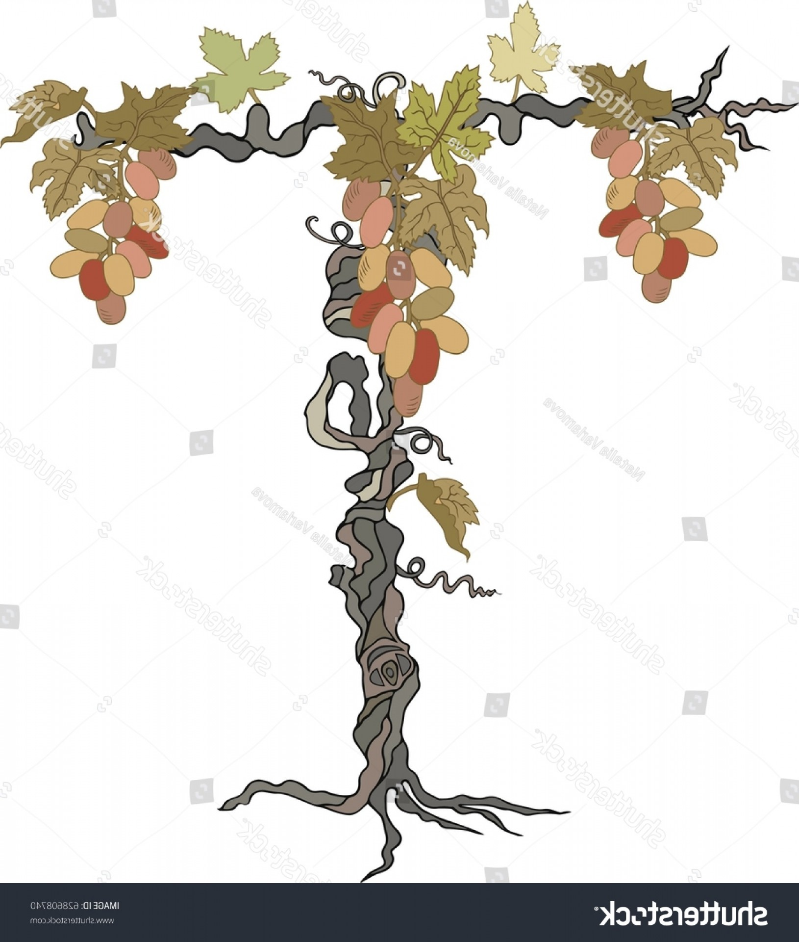 Vector Vine Tree: Hand Drawn Letter T Grape Vine