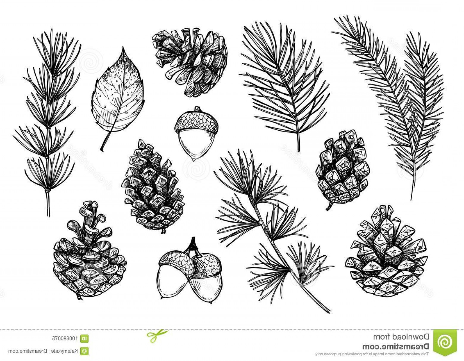 Pine Leaves Vector: Hand Drawn Vector Illustrations Forest Autumn Collection Spru Spruce Branches Acorns Pine Cones Fall Leaves Design Elements Image