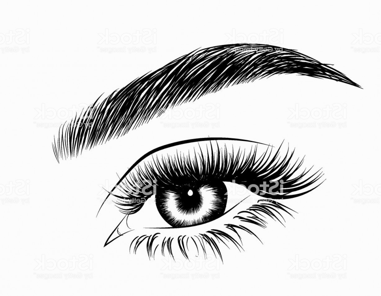 Top Eye Lashes Vector: Hand Drawn Womans Eye With Perfectly Shaped Eyebrows And Full Lashes Gm