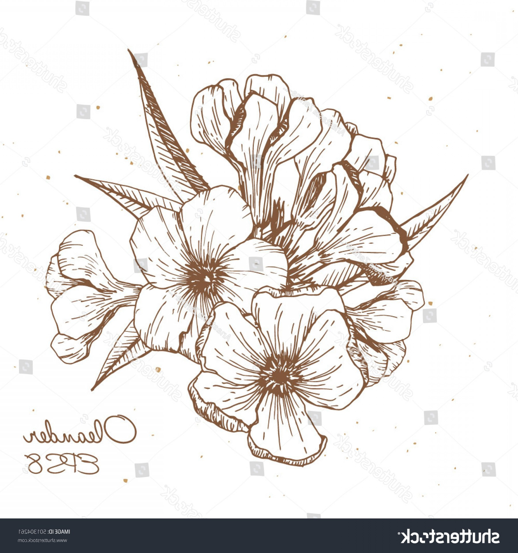 Stock Vector Graphics: Hand Made Drawing Of Kaner Flower Oleander Flower Vector Graphics Engraved Style Stock Vector
