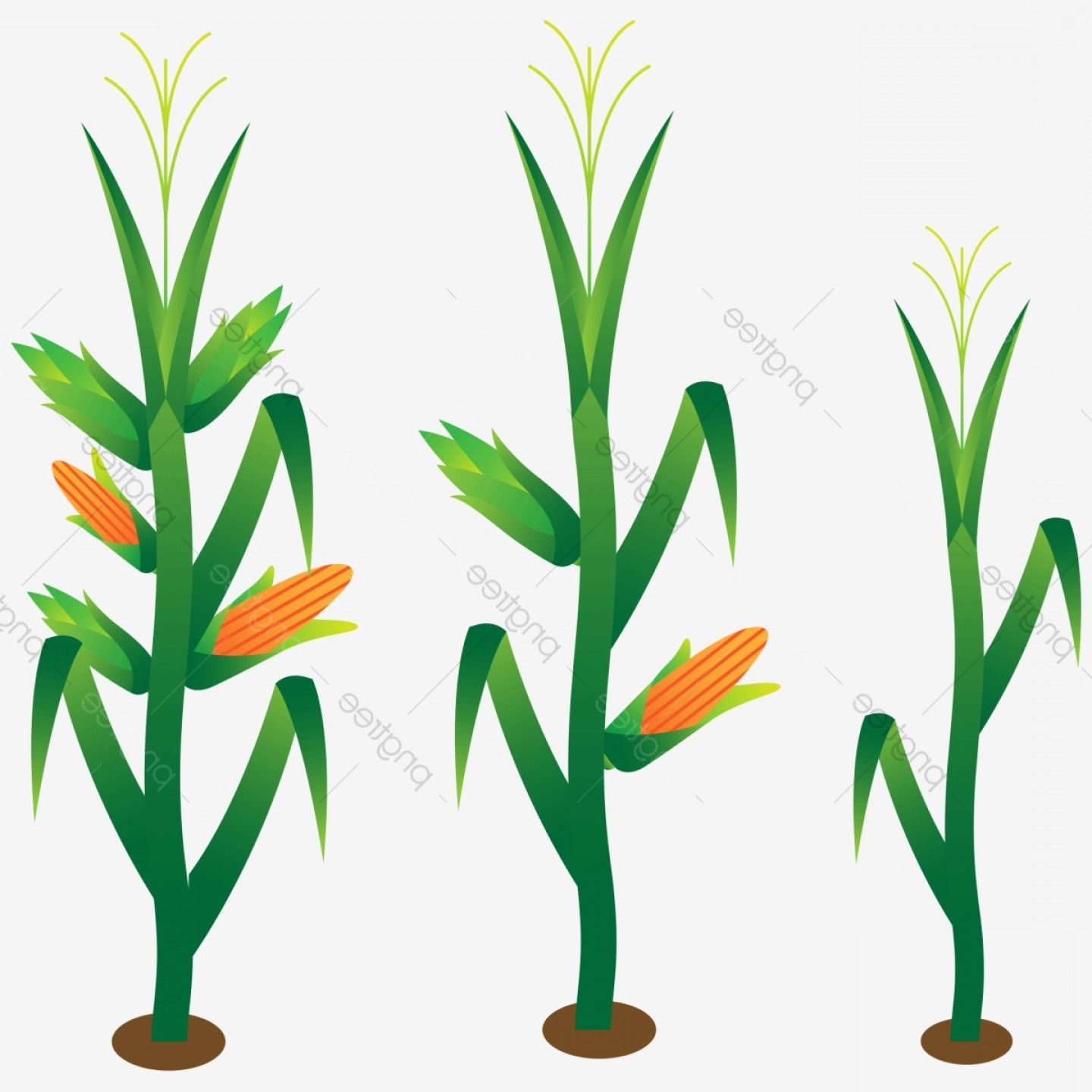 Maize Vector Tree: Hand Painted Corn Corn Stalk Plant