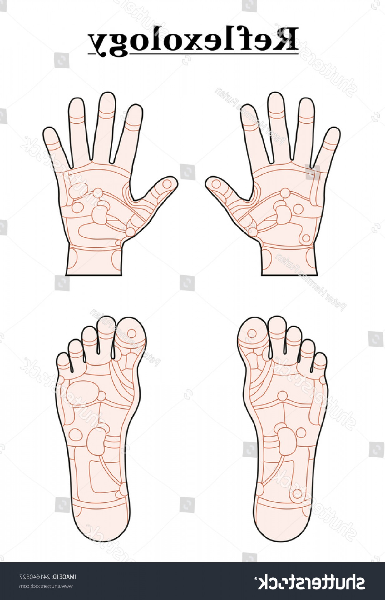 Vector Travel Cooler Parts: Hands Feet Divided Into Reflexology Areas