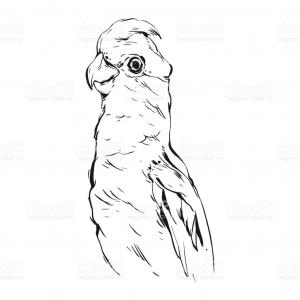 Abstract Vector Art Parrot: Photostock Vector Flying Macaw Parrot Vector Graphic