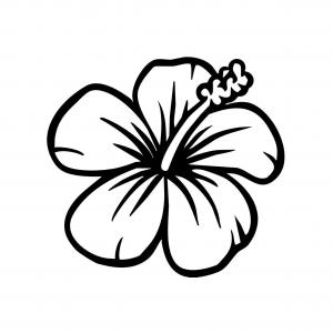Vector Hawaiian Flower Simple: Hawaiian Flower Sketch Hawaiian Flowers Drawing Easy Leaf Outline Image Nextinvitation
