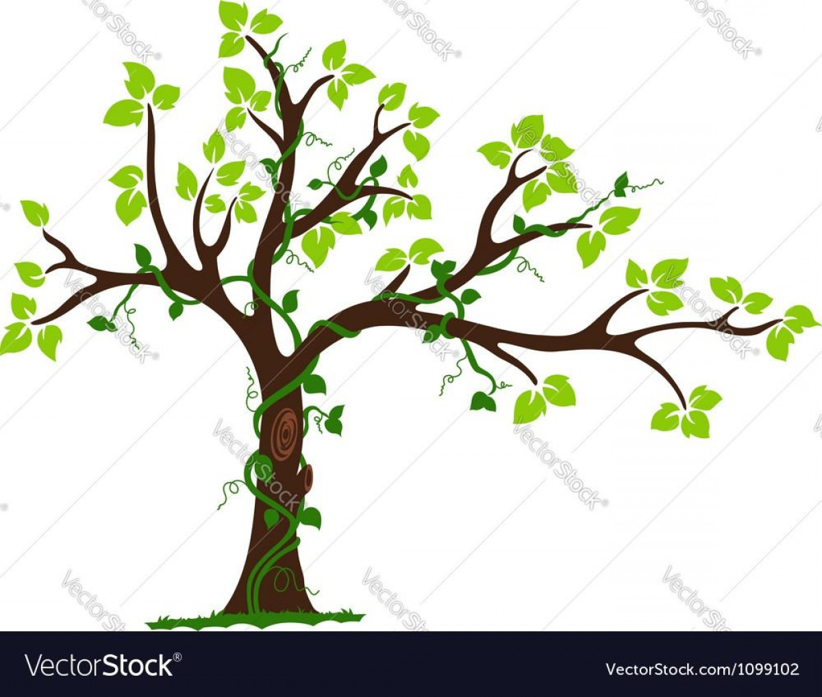 Vector Vine Tree: Hd Tree With Liana And Vine Vector Library