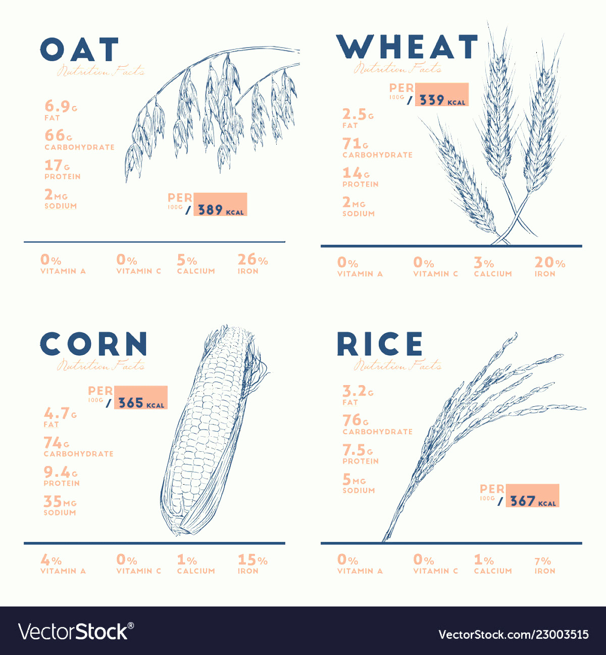 Vector Cereal Nutrition: Health Benefits Of Cereals Rice Wheat Oat And Vector