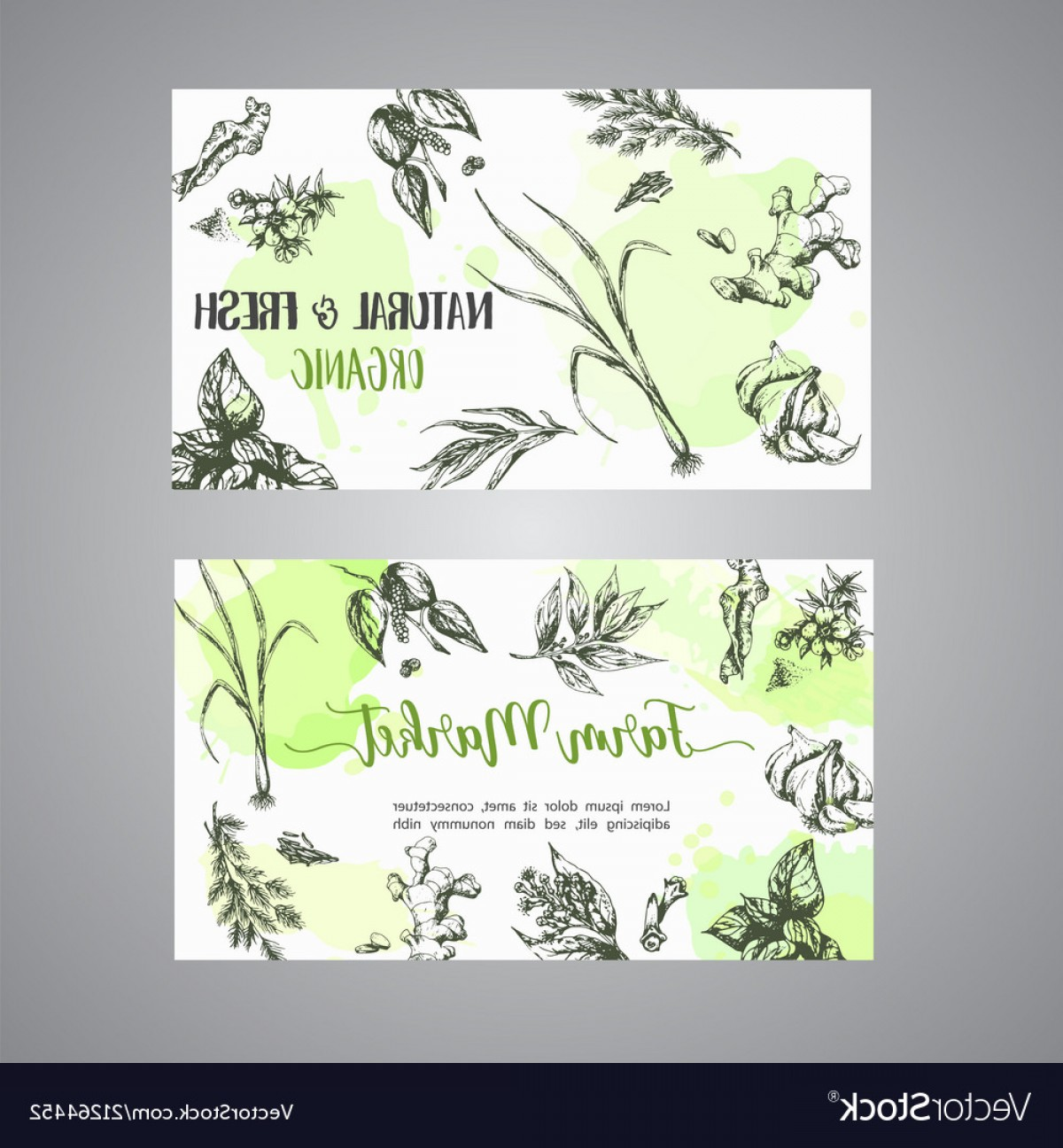 Plant Cards Vector: Herbs And Spices Cards Herb Plant Spice Hand Vector
