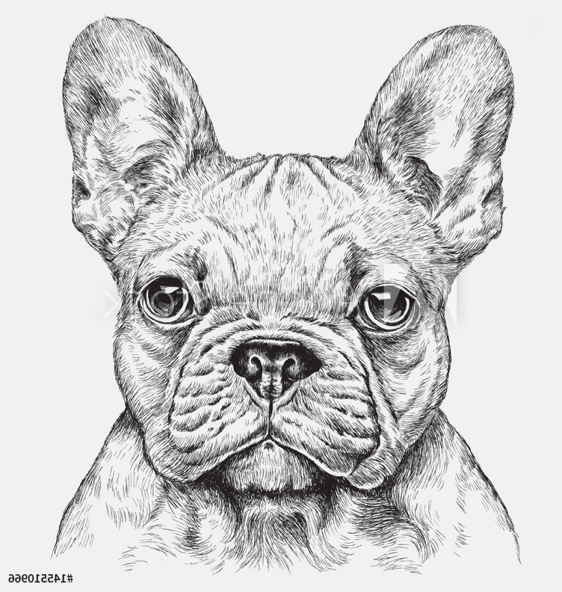 Bulldog Vector Art: Highly Detailed Hand Drawn French Bulldog Vector Illustration F