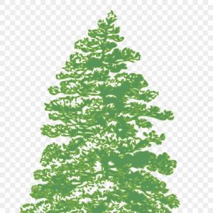 Evergreen Tree Silhouette Vector: Hjmhbmovector Graphics Tree Silhouette Png Green Transparent Png