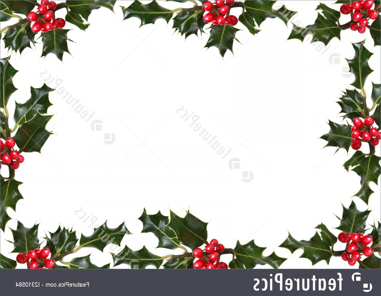 Holly Berry Vector Border: Holly Leaf Red Berry Border