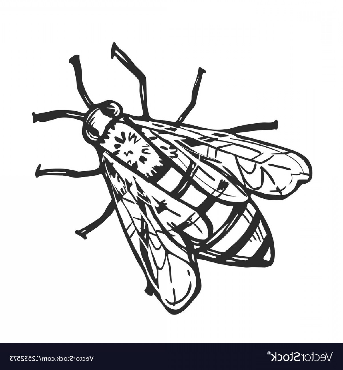 Bee Drawing Vector: Honey Bee Isolated Freehand Pencil Drawing Vector