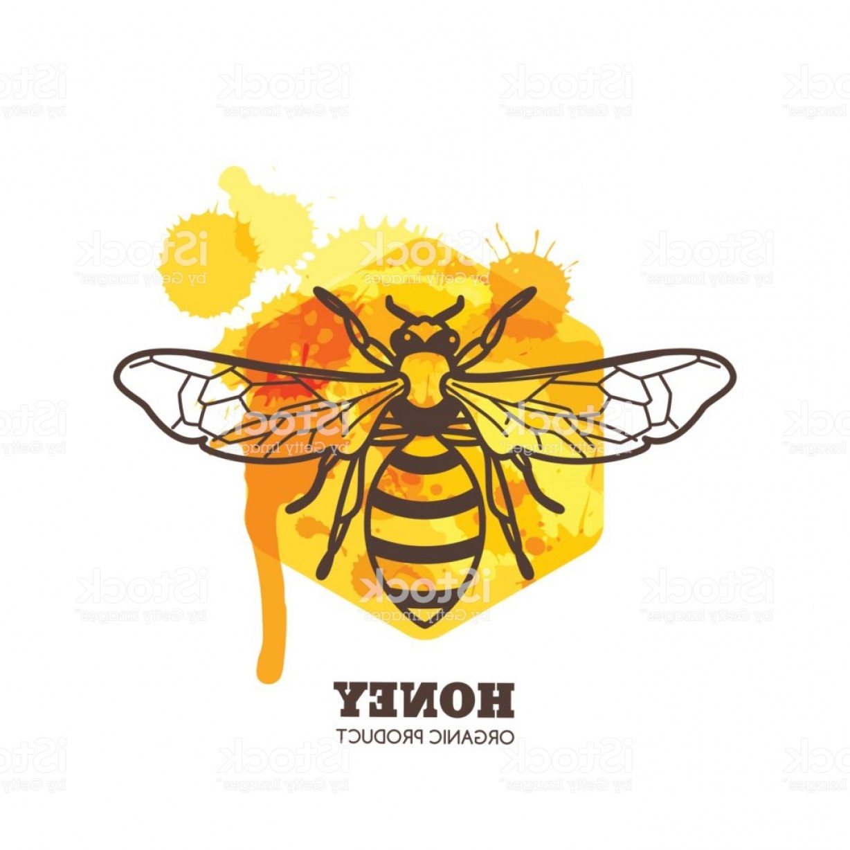 Bee Outline Vector: Honey Label Emblem Design Vector Honeybee On Watercolor Honeycombs Gm