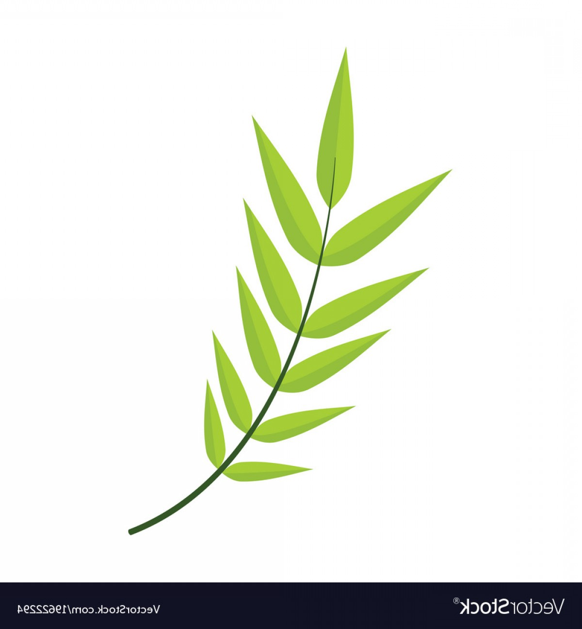 Vector Leaf Graphicd: Honey Locust Leaves Graphic Vector