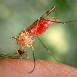 Vector-Borne Disease Climate Change: How Vector Borne Diseases Are Spreading With Climate Change