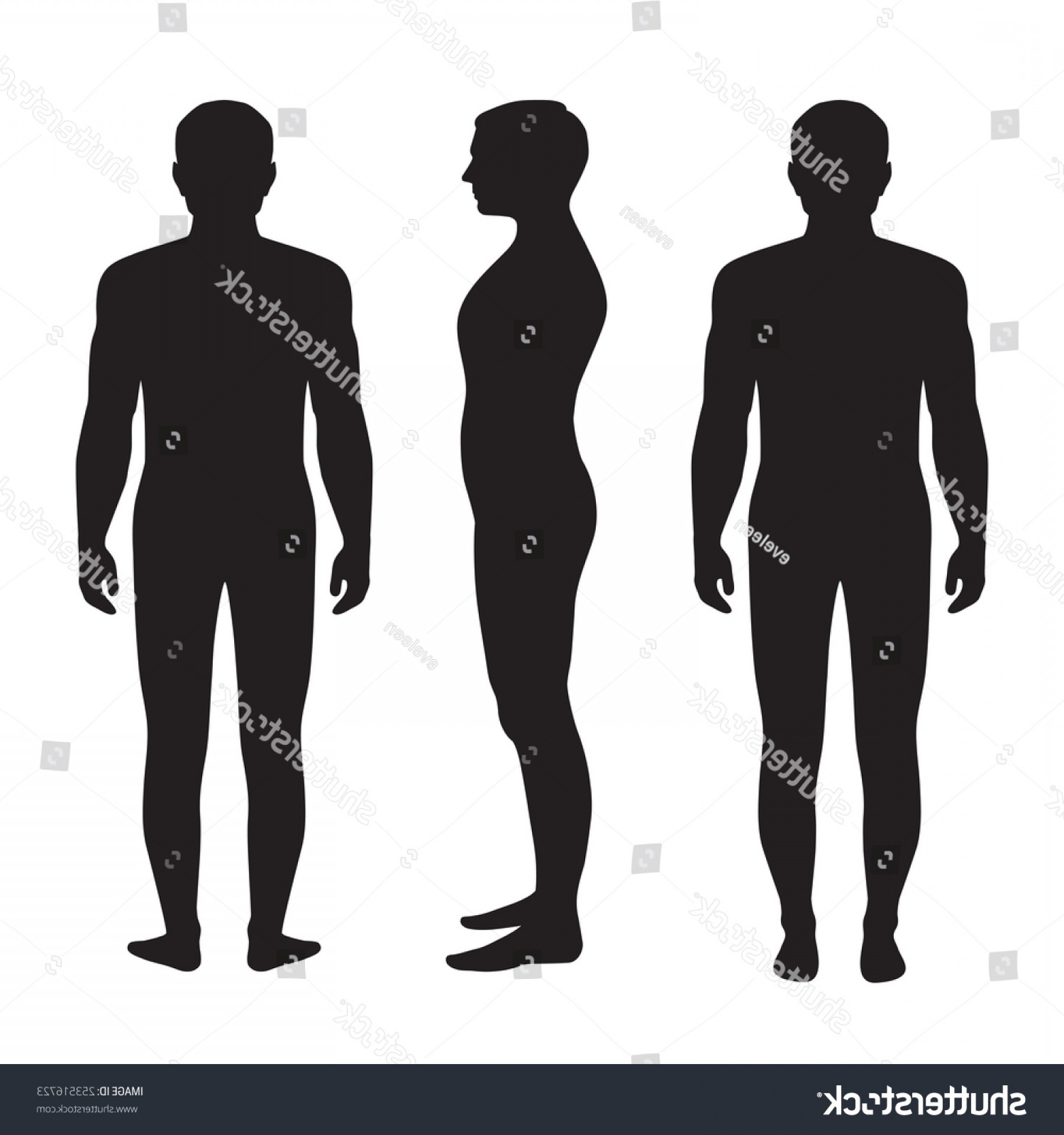 Male Silhouette Vector Art: Human Body Anatomy Vector Man Silhouette