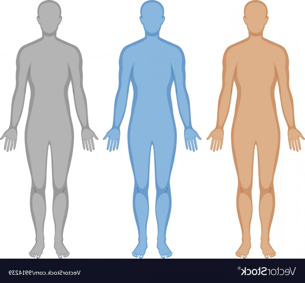 Human Body Outline Vector: Human Body Outline In Three Colors Vector