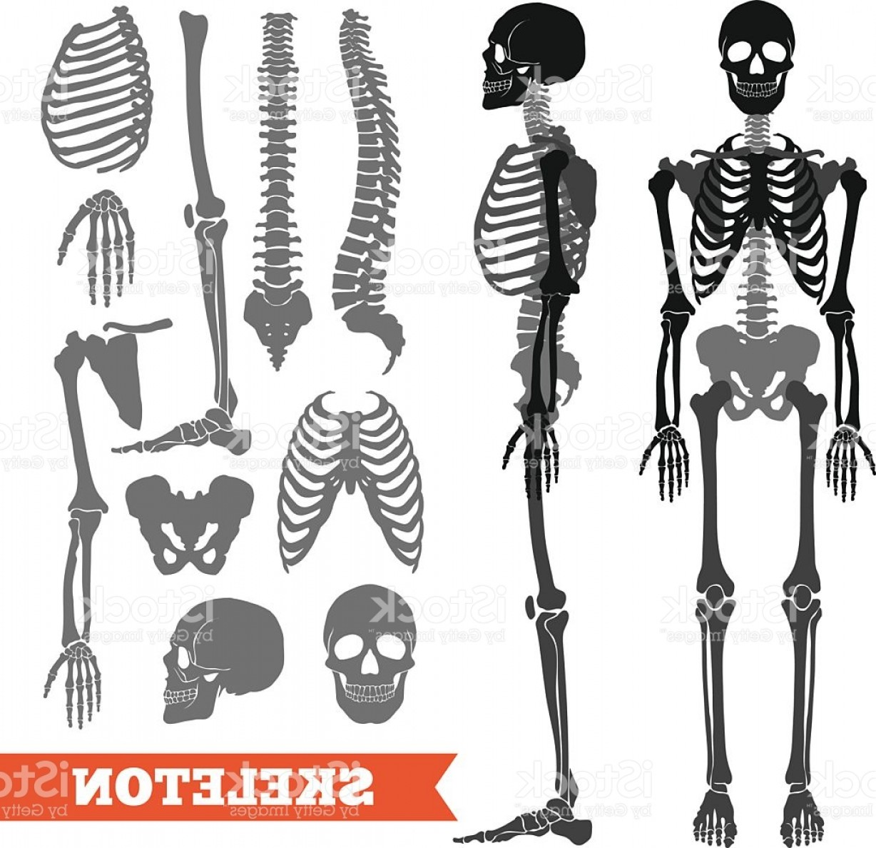 Skeletons In Love Vector: Human Bones And Skeleton Set Gm