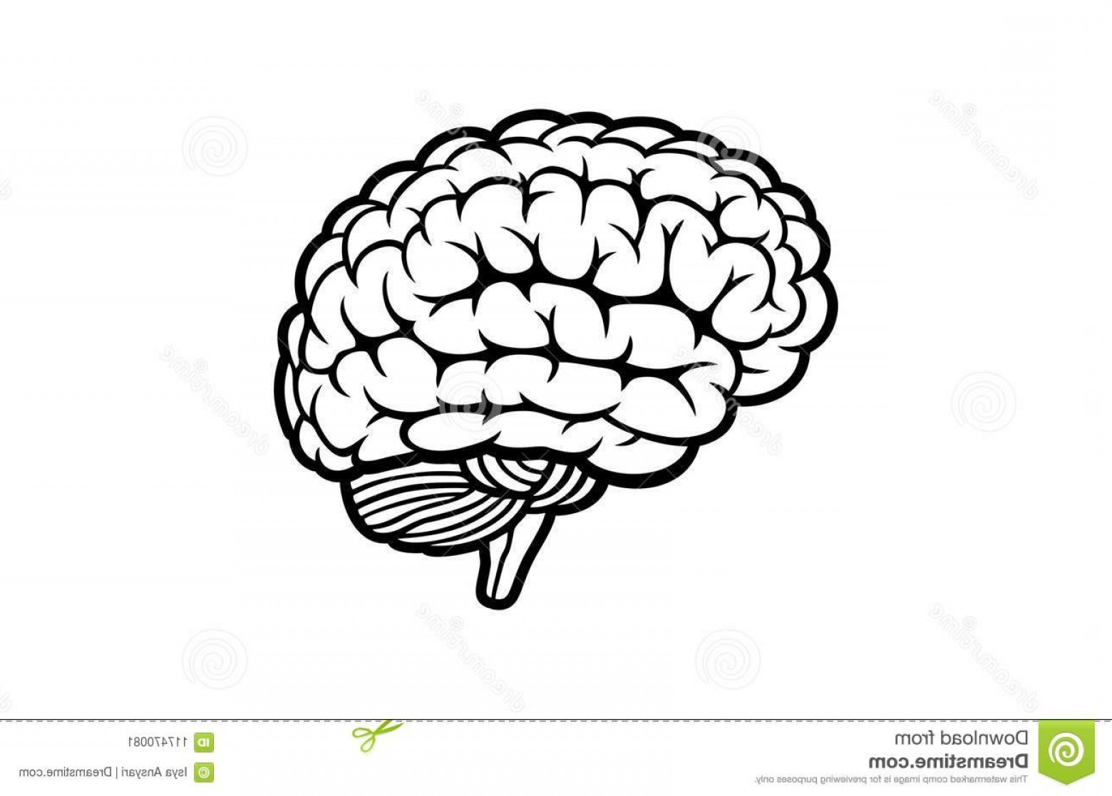 Brain Vector Art: Human Brain Vector White Background Design Vector Outline Illustration Human Brain White Background Image