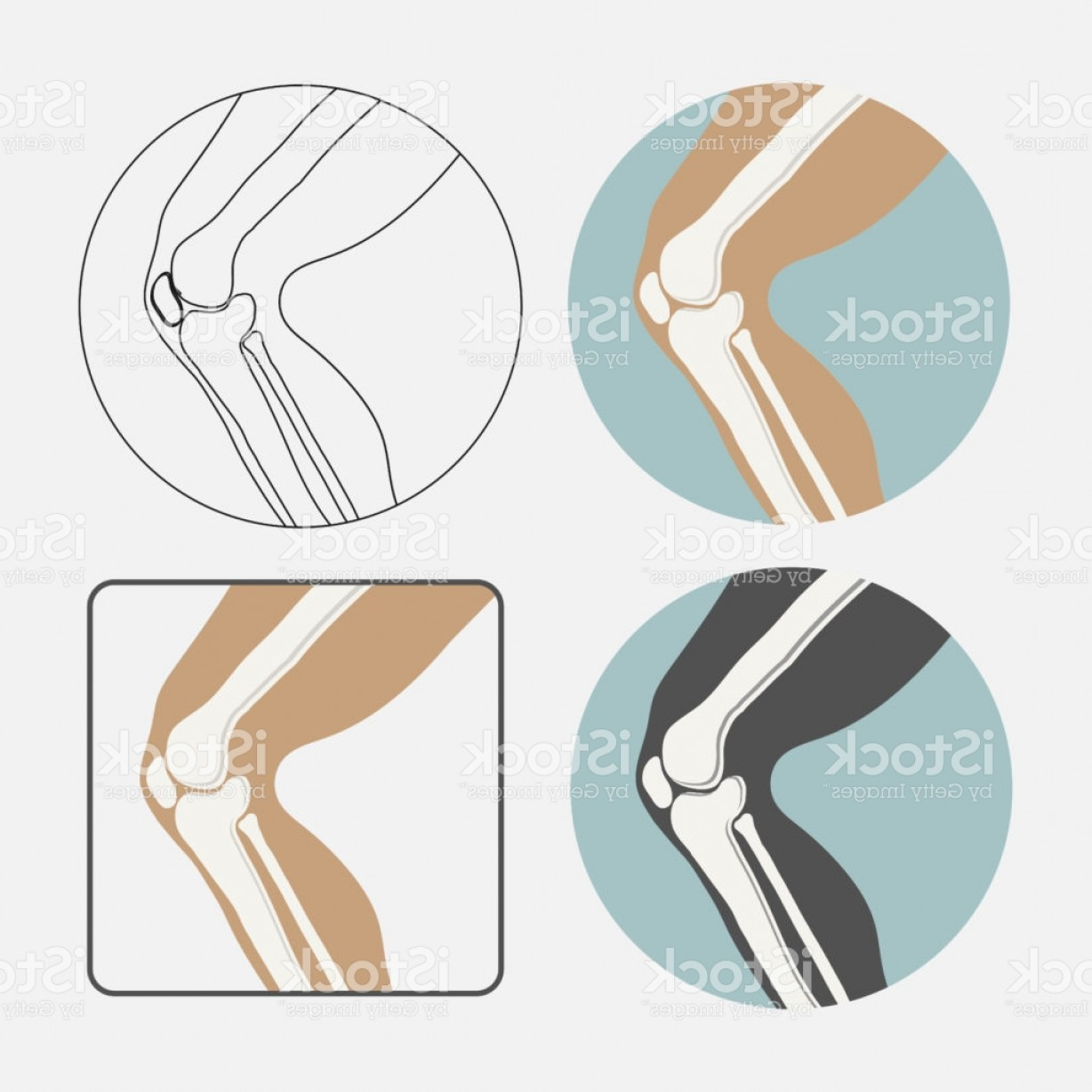 Knee Board Vector: Human Knee Joint Icon Set Logo For Orthopedic Clinic Flat Styl Gm