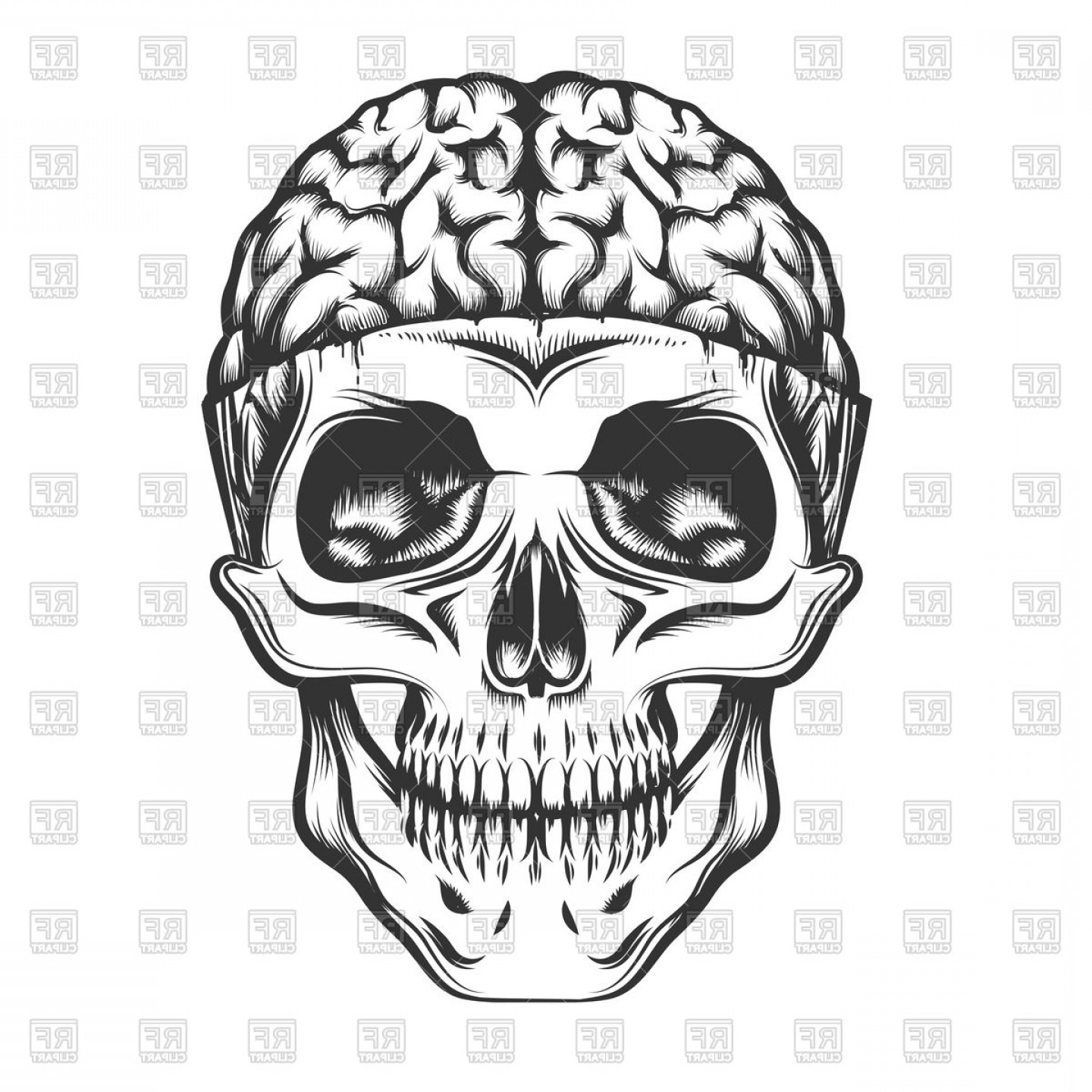 Brain Vector Art: Human Skull With Open Brain Vector Clipart
