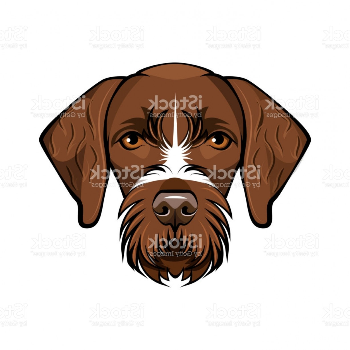 Pointer Dog Vector: Hunting Dog German Wirehaired Pointer Vector Illustration Gm