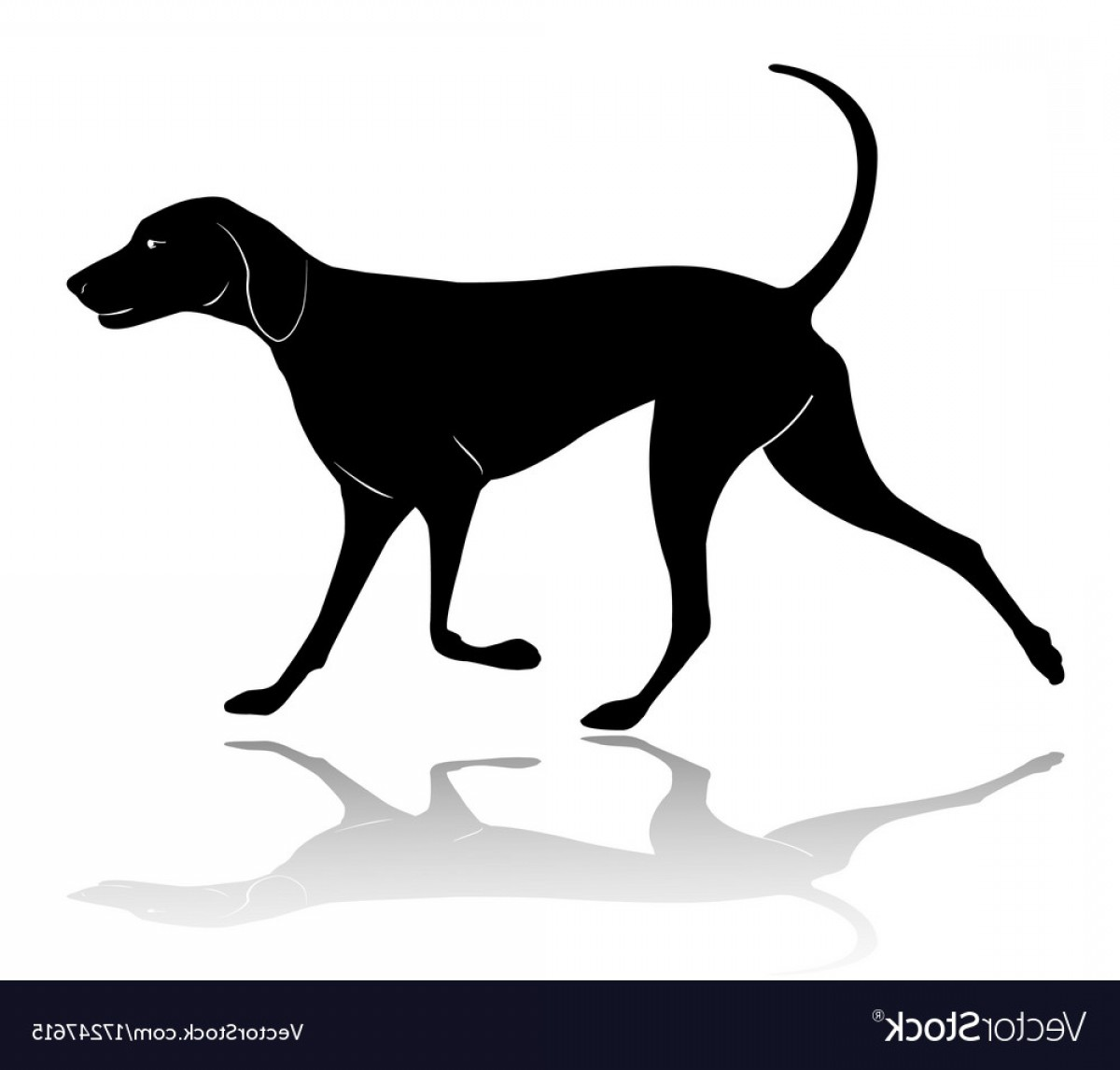 Vector Silhouette Dog Walk: Hunting Dog Walking Silhouette Vector