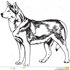 Husky Sitting Silhouette Vector: Husky Dog Breed Vector Illustration Illustration