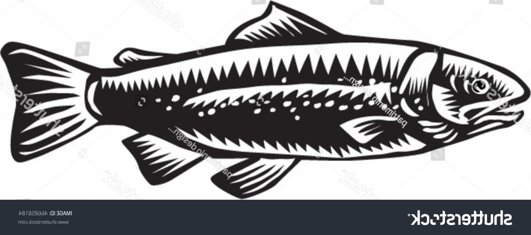 Speckled Trout Vector: Illustration Spotted Sea Trout Fish Viewed