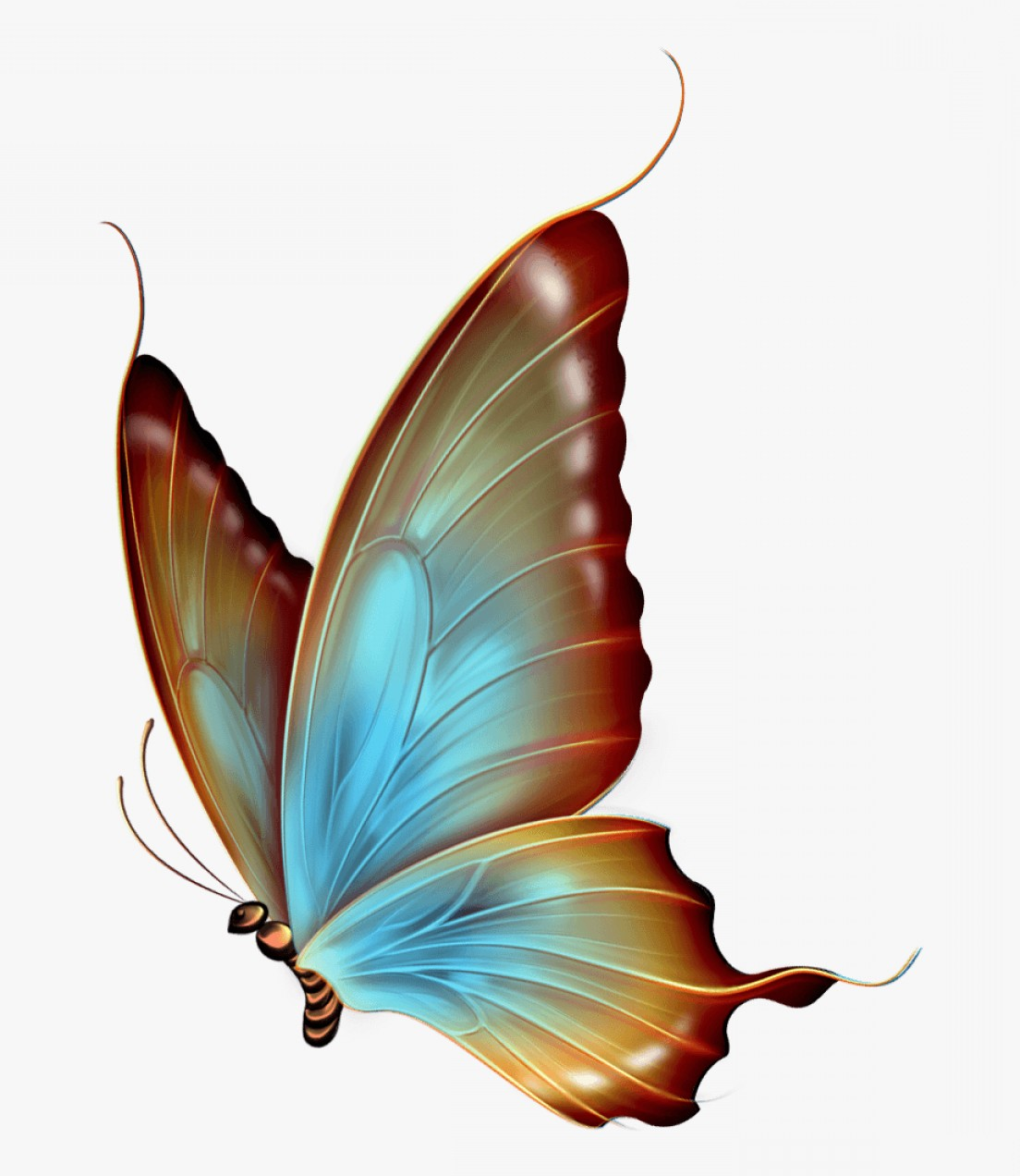 Real Butterfly Vector: Imorswimming Butterfly Clipart Transparent Transparent Background Butterfly Wing