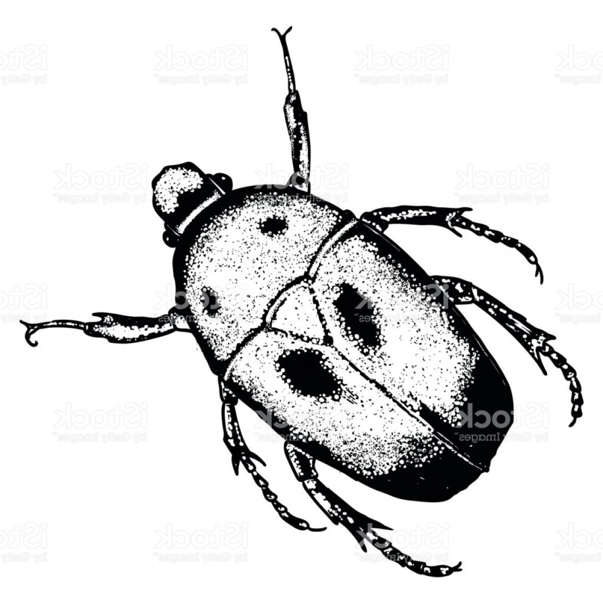 Bug Vector Art: Insect Bug Or Beetle Trendy Embroidery Stippling And Hatching Shading Style Gm