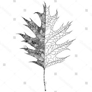 Red Oak Tree Vector: Autumn Leaves Falling Vector Illustration Red